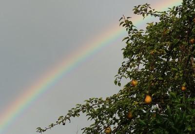 rainbow, pear